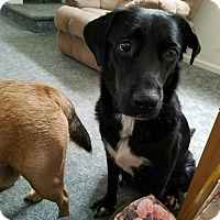 Adopt A Pet :: Dixie (courtesy listing) - Bartonsville, PA