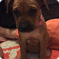 Adopt A Pet :: Nina - Fort Lauderdale, FL
