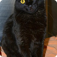 Adopt A Pet :: Elvis-front declawed - Akron, OH