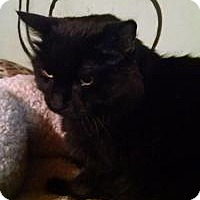 Adopt A Pet :: Belle - Bridgeton, MO