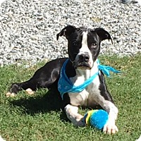 Adopt A Pet :: Skipper - Greensboro, NC