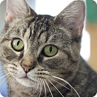 Adopt A Pet :: Grace Slick - LaGrange, KY