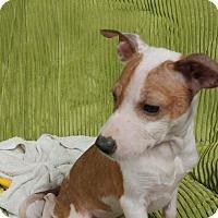 Adopt A Pet :: Harper - Forest Hill, MD