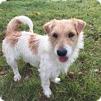 Adopt A Pet :: Ace - Vacaville, CA