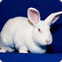 Adopt A Pet :: Berta - Huntsville, AL