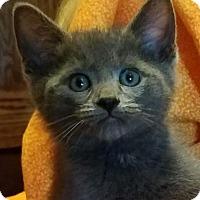Adopt A Pet :: Asher - Colfax, IA