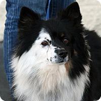 Adopt A Pet :: Gary - Palmdale, CA
