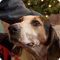 Adopt A Pet :: Addie - Farmington, MI