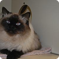 Adopt A Pet :: Mr Big - New Castle, PA