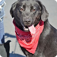 Adopt A Pet :: Maxx - Albemarle, NC