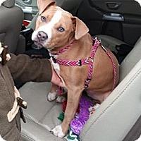 Adopt A Pet :: Coco - Bardonia, NY