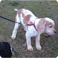 Adopt A Pet :: Max - Tacoma, WA
