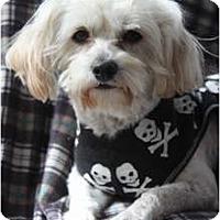 Adopt A Pet :: POSIE - san diego, CA