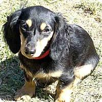 Adopt A Pet :: Eliza - San Jose, CA