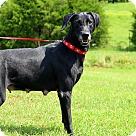 Adopt A Pet :: Delia