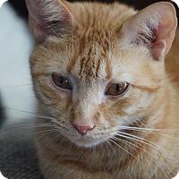 Adopt A Pet :: Patterson - Philadelphia, PA