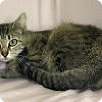Adopt A Pet :: Patience - Powell, OH