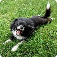 Adopt A Pet :: Snoop Dog - Salem, OR