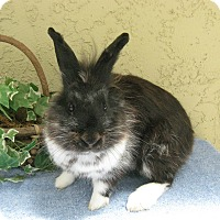 Adopt A Pet :: Marcus - Bonita, CA