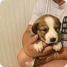 Adopt A Pet :: 'Wine Puppy': Champagne
