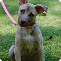 Adopt A Pet :: AALIYAH - Alpharetta, GA