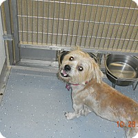 Adopt A Pet :: BAILEY - Sandusky, OH
