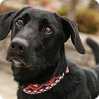 Adopt A Pet :: Spencer - Falls Church, VA