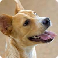 Adopt A Pet :: Tabatha - Palm Springs, CA