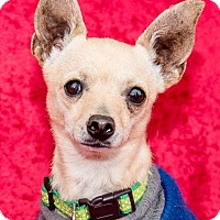 Adopt A Pet :: Ricky - San Marcos, CA