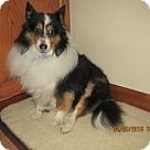 Adopt A Pet :: Buddy (medical hold)
