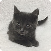 Adopt A Pet :: Yoda - Mission Viejo, CA
