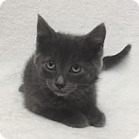 Adopt A Pet :: Yoda - Mission Viejo, CA