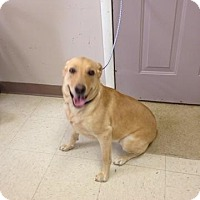 Adopt A Pet :: Cricket - Rexford, NY