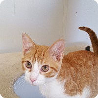 Adopt A Pet :: Mozart - Danville, IN
