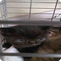 Adopt A Pet :: HERSHEY - Jacksonville, FL