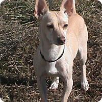 Adopt A Pet :: Mimi - Maynardville, TN