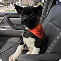 Adopt A Pet :: Kaiden - Santa Clarita, CA