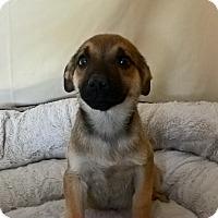 Adopt A Pet :: Jimmy - Las Vegas, NV