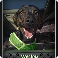Adopt A Pet :: Wesley - Doylestown, PA