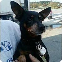 Adopt A Pet :: Boston - Columbus, OH
