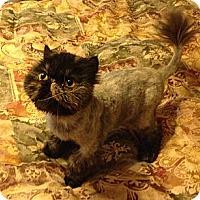 Adopt A Pet :: Autumn - Beverly Hills, CA