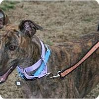 Adopt A Pet :: LA's Sage