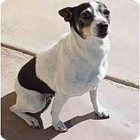 Adopt A Pet :: Terry - Scottsdale, AZ