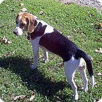 Adopt A Pet :: Selena - Novi, MI
