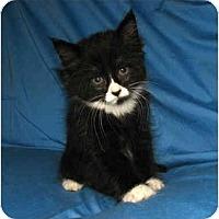 Adopt A Pet :: Bobbie - Oxford, NY