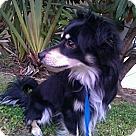 Adopt A Pet :: Lanai