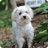 Adopt A Pet :: Johnny - Port Washington, NY