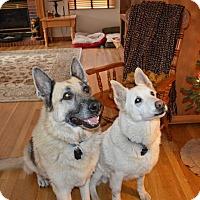 Adopt A Pet :: Jager & Stryder - Denver, CO