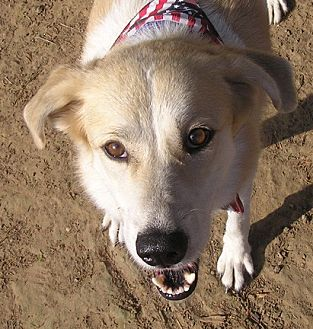 Collie Mix Dog for adoption in Cross Roads, Texas - Emma