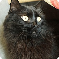 Adopt A Pet :: Chipper - Pasadena, CA
